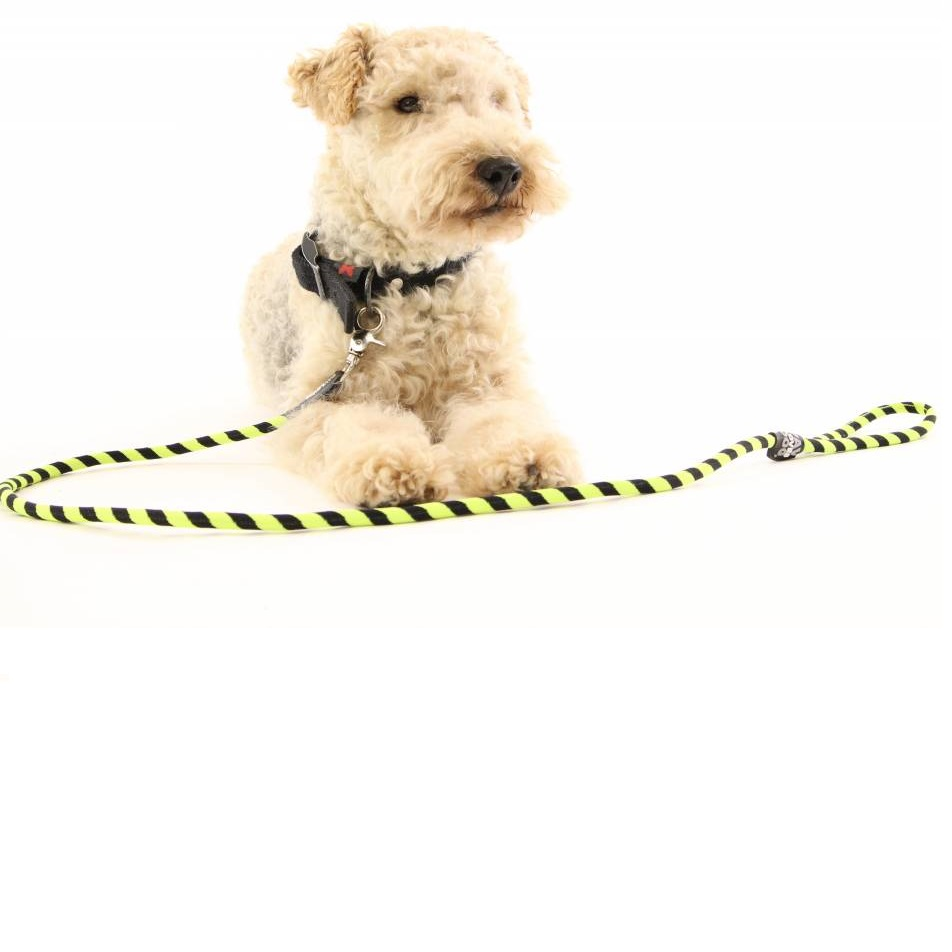 Hondenlijn